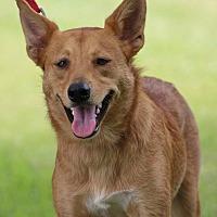 Adopt A Pet :: Dakota - SOUTHINGTON, CT