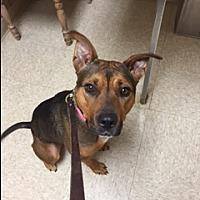 Adopt A Pet :: Pebbles - Elyria, OH