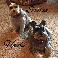 Adopt A Pet :: Sabine and Heidi - Sharonville, OH