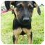 Photo 1 - Shepherd (Unknown Type) Mix Puppy for adoption in Detroit, Michigan - Vida-adopted!