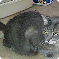 Adopt A Pet :: Smokey - Columbus, GA