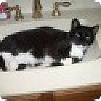 Adopt A Pet :: Tuck - Tempe, AZ