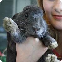 Adopt A Pet :: Mr. Parker - Maple Shade, NJ