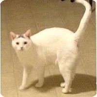 Adopt A Pet :: Kitto - Oxford, CT