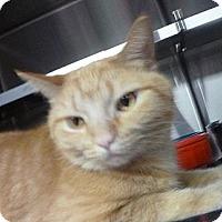 Adopt A Pet :: Betty - St. Petersburg, FL