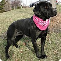 Adopt A Pet :: Rosie - Lewisville, IN