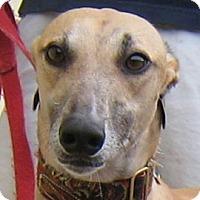 Adopt A Pet :: Chad - Oak Ridge, NC