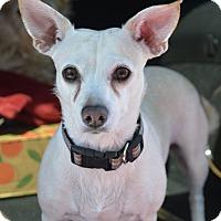 Adopt A Pet :: Blanca - Meridian, ID