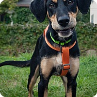 Adopt A Pet :: Cheyenne - Minneapolis, MN