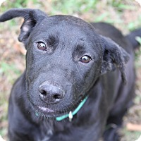 Adopt A Pet :: Martha - PENDING - in Maine - kennebunkport, ME