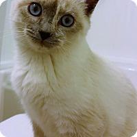 Adopt A Pet :: Iridessa - Chattanooga, TN