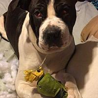 Adopt A Pet :: Neveah - Cameron, NC