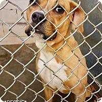 Adopt A Pet :: Bessie @ Animal Shelter - Zanesville, OH