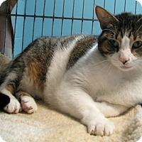 Adopt A Pet :: Kiki - New Kensington, PA