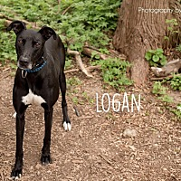 Adopt A Pet :: Logan - Westerville, OH