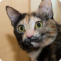 Adopt A Pet :: Bianca - Irvine, CA