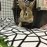 Adopt A Pet :: Benni - North Lima, OH