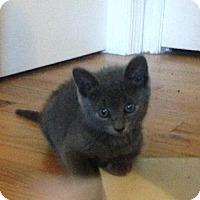 Adopt A Pet :: Porcupine - Trenton, NJ