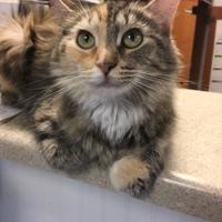 Adopt A Pet :: Mona - Richmond, IN