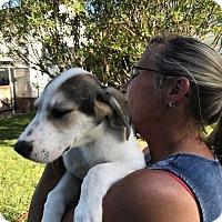 Adopt A Pet :: Tripp - Darien, GA