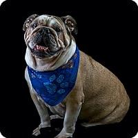 Adopt A Pet :: Destiny - Odessa, FL