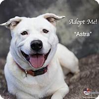 Adopt A Pet :: Astra - Acton, CA