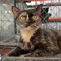 Adopt A Pet :: 10310317 - Brooksville, FL