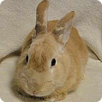 Palomino Mix for adoption in Los Angeles, California - Pumpkin