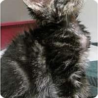 Adopt A Pet :: Tiddly Wink - Maywood, NJ