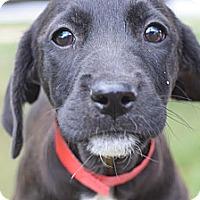 Adopt A Pet :: Tessa - South Jersey, NJ