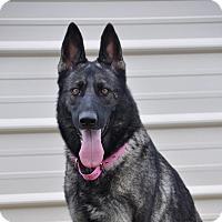 Adopt A Pet :: Gabby - Dripping Springs, TX
