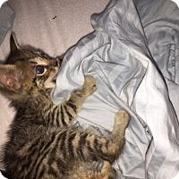 Adopt A Pet :: Charlie - Cranford/Rartian, NJ