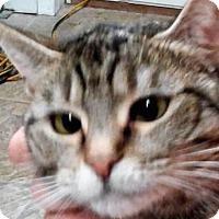 Adopt A Pet :: Venus W - Maryville, TN