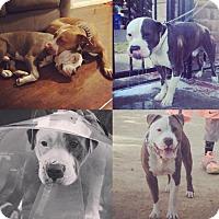 Adopt A Pet :: Marlo - Santa Monica, CA