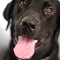 Adopt A Pet :: Deputy - Denton, TX