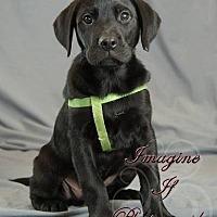 Adopt A Pet :: Rex - Vancouver, BC
