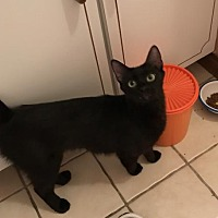 Adopt A Pet :: Precious - Melbourne, FL