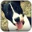 Photo 3 - Labrador Retriever/Boxer Mix Dog for adoption in Covington, Kentucky - Romper