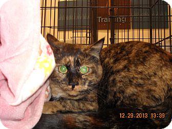 Domestic Shorthair Cat for adoption in Riverside, Rhode Island - Penelope