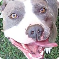 Adopt A Pet :: Stormy - Claypool, IN