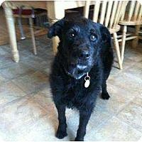 Adopt A Pet :: Dock - Seattle, WA