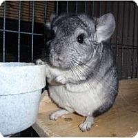 Adopt A Pet :: Rue - Virginia Beach, VA
