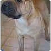 Adopt A Pet :: Dexter - Bethesda, MD
