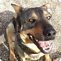 Adopt A Pet :: Reece - Geneseo, IL