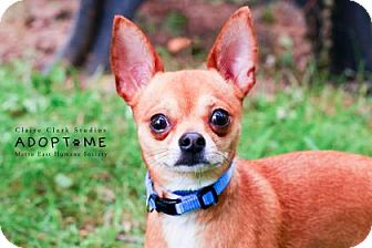 Chihuahua Mix Dog for adoption in Edwardsville, Illinois - Moose