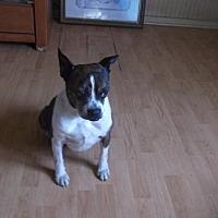 Adopt A Pet :: Bootsie - Crossville, AL