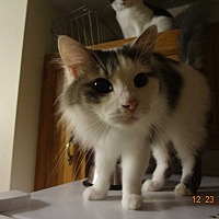 Adopt A Pet :: Chase - Saint Albans, WV
