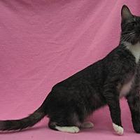 Adopt A Pet :: Fiona - Redwood Falls, MN