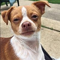 Adopt A Pet :: Lil Liza - Salem, NH