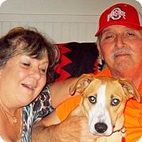 Adopt A Pet :: Bailey - Plain City, OH